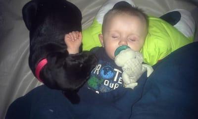 bebe perro negro