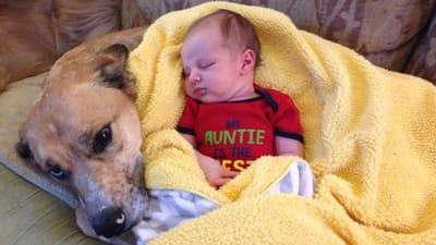 bebe durmiendo con perro callejero