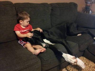 ninos perros sofa