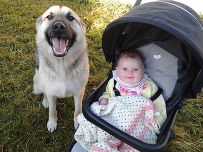 bebe carricoche junto a perro