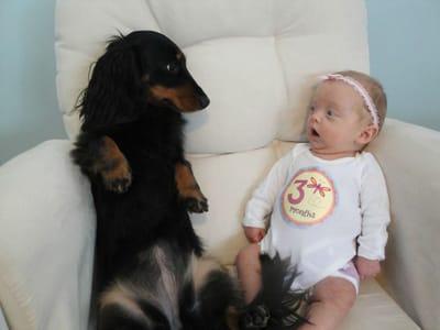 bebe asustado mirando teckel