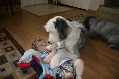 perros cuidando a bebes