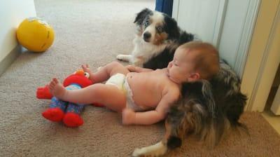 bebe tumbado sobre perro