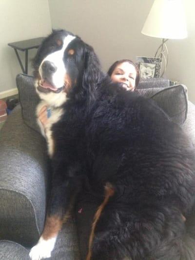 perro gigante sobre dueña