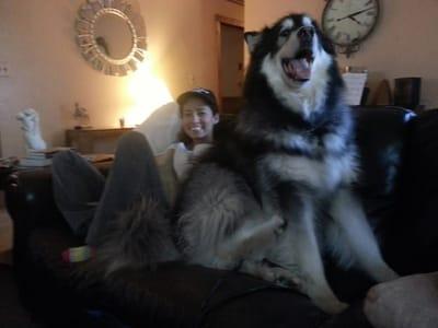 perro gigante y dueña