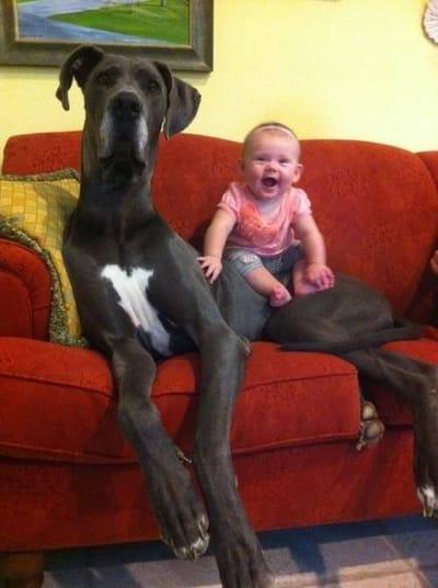 perro gigante y bebé