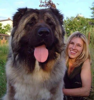 perro gigante y mujer