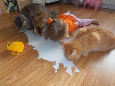 niña y gatos bebiendo leche
