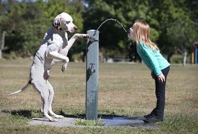 perro y niña bebiendo agua