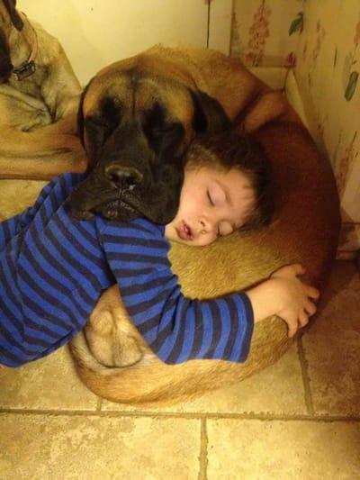 niño y perro dormidos
