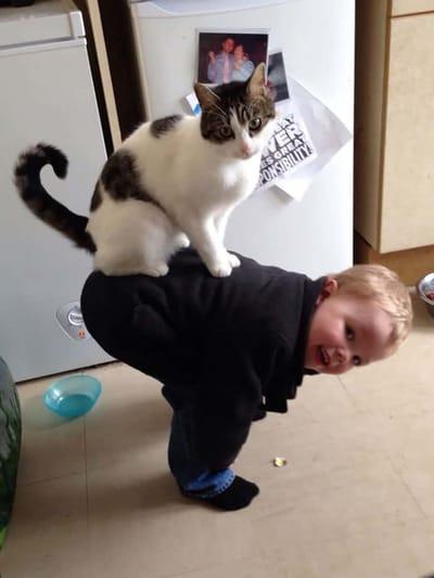 gato sobre un niño