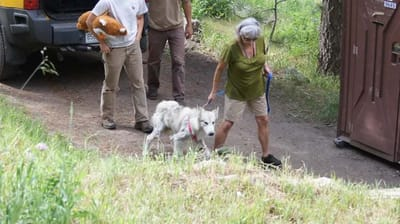 rescatadora lleva perro lobo checo atado