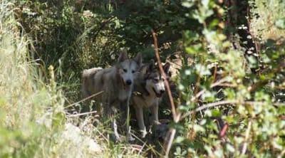 tenali y casiel juegan en el bosque