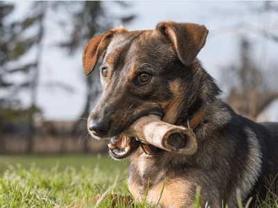 carne cruda prohibida perros