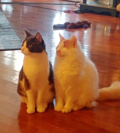 gato ciego martin amigo inseparable