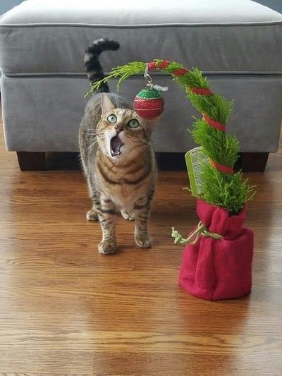 gato asombrado arbol de navidad