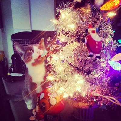 gato con luces de navidad