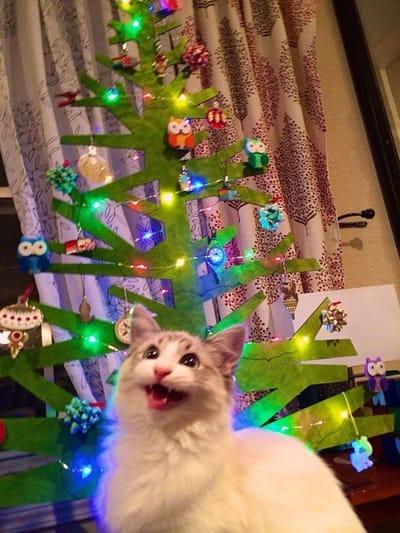 gato riendo navidad