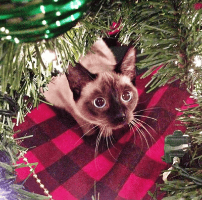 gato asustado navidad