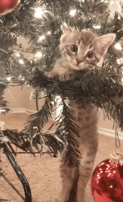 bebe gato arbol de navidad