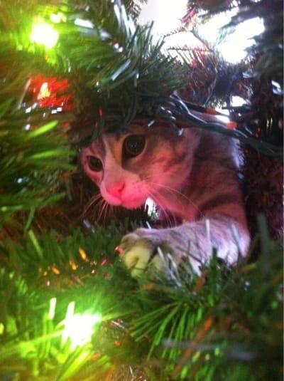 gato escondido arbol navidad