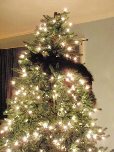 gato subido arbol navidad