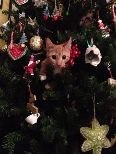 gato dentro arbol navidad
