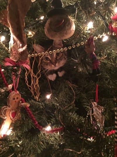 gato arbol navidad luces