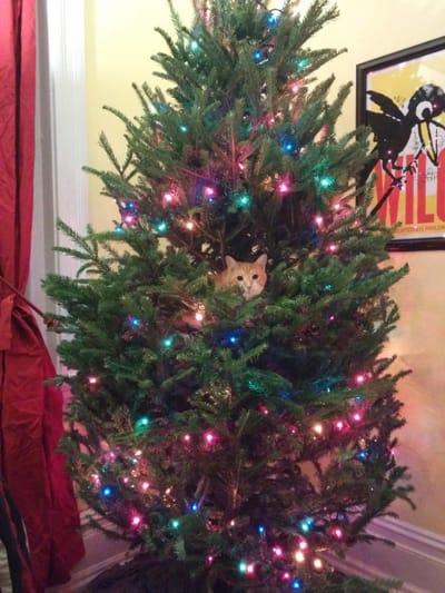 gato pelirrojo navidad