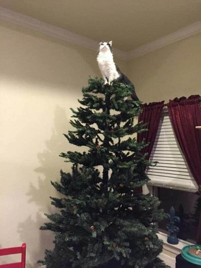 gato encima arbol de navidad