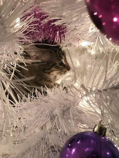 gato dentro arbol blanco