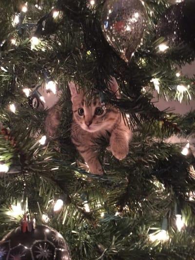 gato subido arbol de navidad
