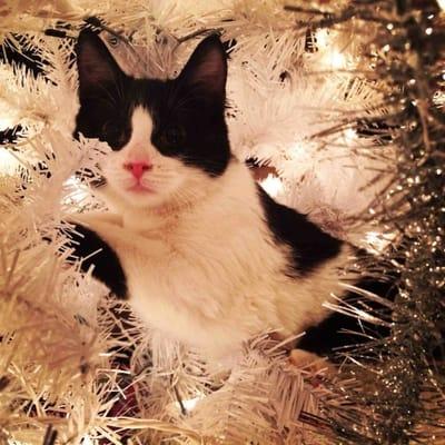 gato blanco y negro arbol de navidad