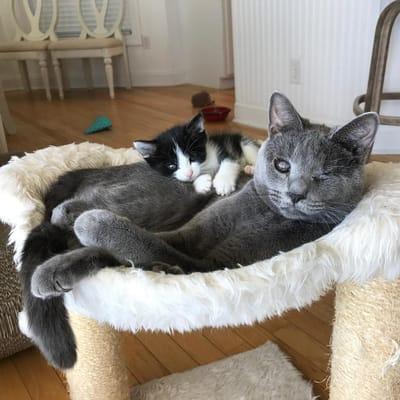 gatitos maltratados felices con su familia adoptiva