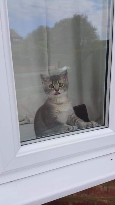 gato sin paciencia esperando ventana