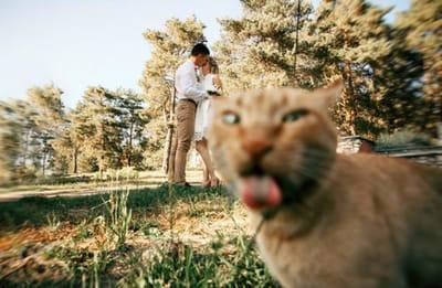 gato selfie boda