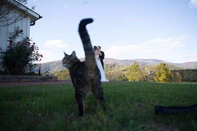 culo gato foto boda