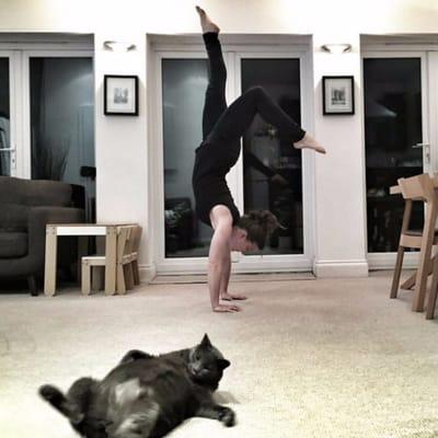 gato pose yoga