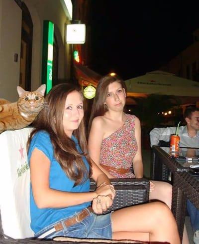 gato posando amigas