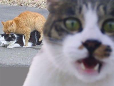 gatos dandose amor