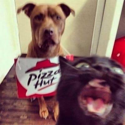 gato pizza hut
