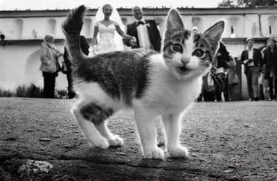gato foto boda