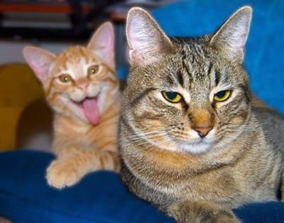gato simpatico gato enfadado