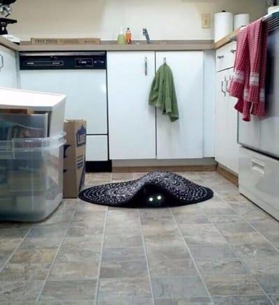 gato demonio bajo la alfombra