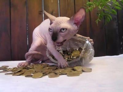 gato sin pelo terror