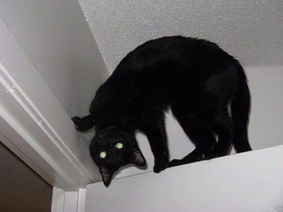 gato negro posturas terror