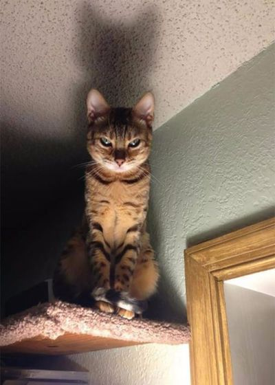 gato sobre la puerta miedo