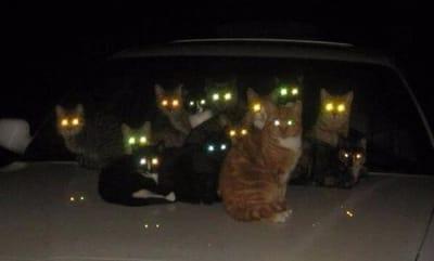 gatos poseidos manada