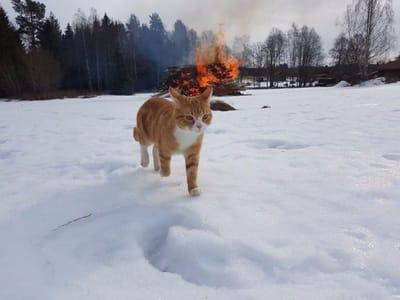 gato incendio