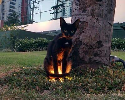 gato negro fuego